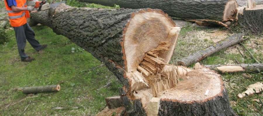Kiedy można wyciąć drzewo na działce? Ministerstwo odpowiada na najczęściej zadawane pytania