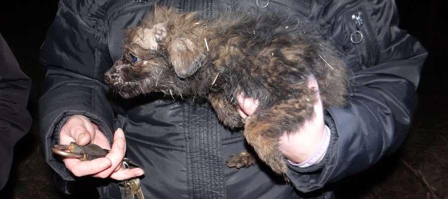 Troje szczeniąt, które były w najgorszej kondycji trafiło pod opiekę inspektorów Towarzystwa Opieki nad Zwierzętami z Olsztyna