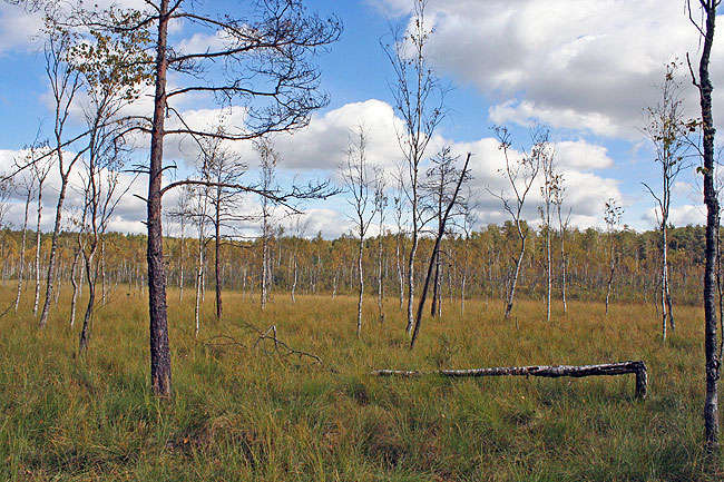 Rezerwat przyrody Jeziorko koło Drozdowa - full image