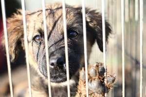 Pomóżmy zwierzakom przetrwać zimę