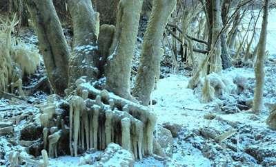 Galerie lodowych rzeźb w lasach elbląskiego nadleśnictwa