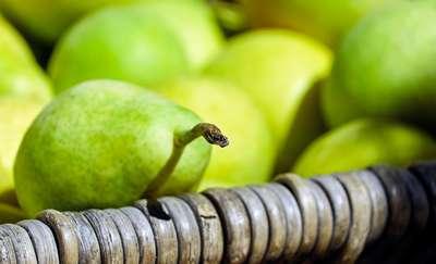 Jakie właściwości zdrowotne ma gruszka?