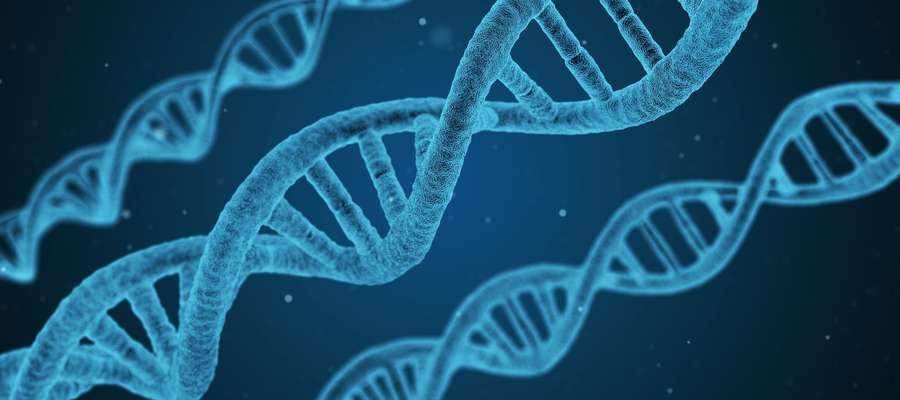 Chcesz być szczupła/-y – spójrz w geny