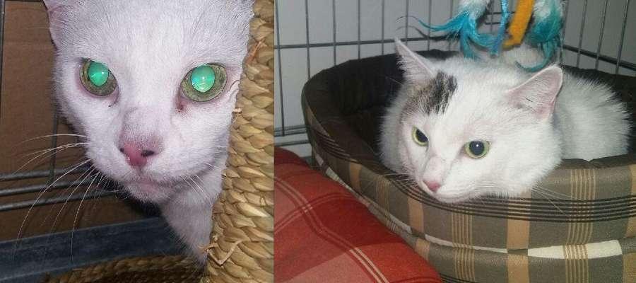 Grubcia i Gwiazdka trafiły do Towarzystwa Opieki nad Zwierzętami