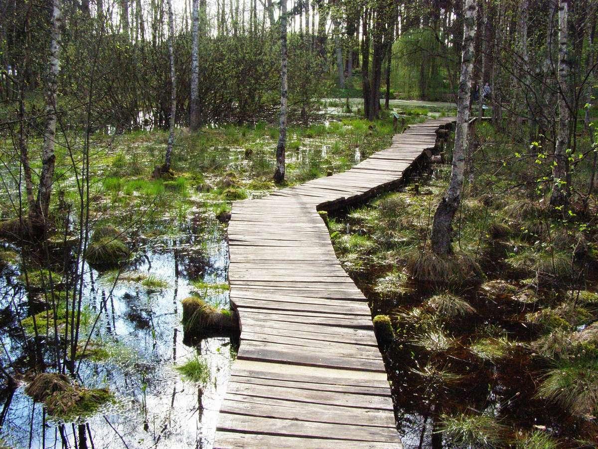 Olsztyńskie lasy zachwyciły popularnych podróżników - full image