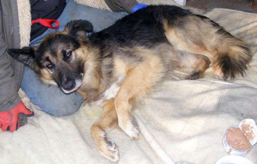 Śmiertelnie chory nie zdążył znaleźć opiekuna dla ukochanego psa. Rex został bez domu i chęci do życia - full image