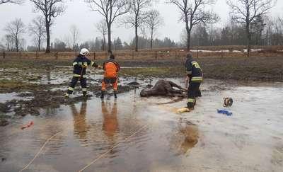 Strażacy uratowali konia