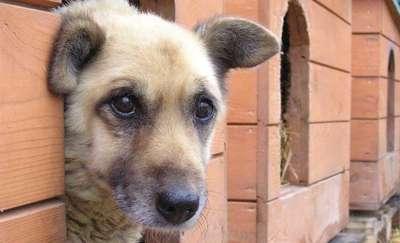Psi dzień kobiet w Schronisku dla Bezdomnych Zwierząt w Tomarynach