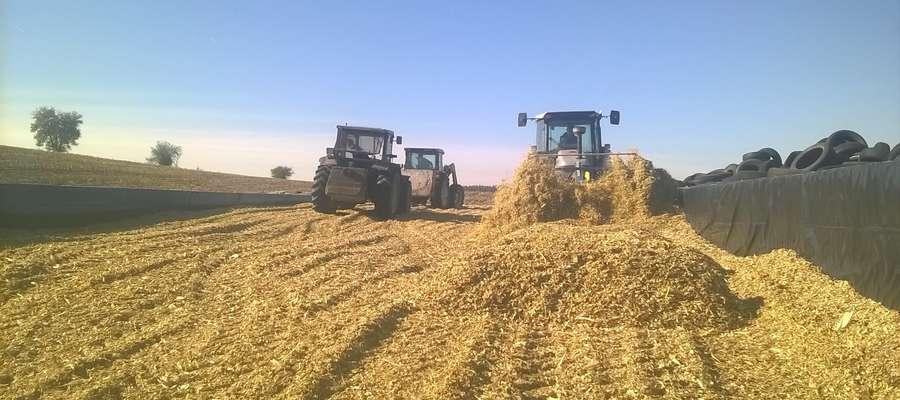 Produkcja kiszonki z kukurydzy w Rodzinnym Gospodarstwie Rolnym Ewy i Wojciecha Jończyk w Garzewku