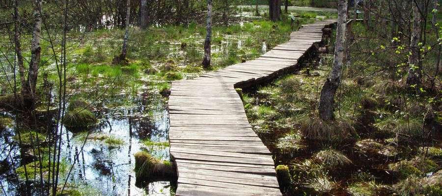Arboretum w Kudypach. Zdjęcie jest ilustracją do treści