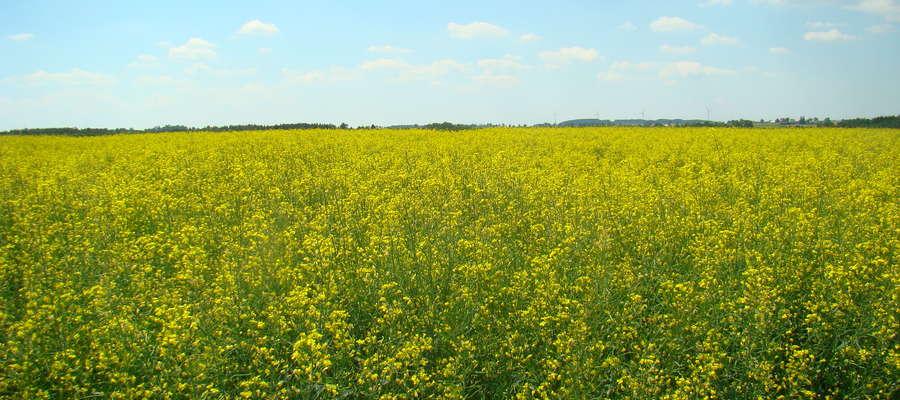 """Konferencja  """"Nowe technologie i innowacje w uprawie zbóż i rzepaku"""" startuje już 2 marca o godzinie 10.00  w WMODR w Olsztynie"""