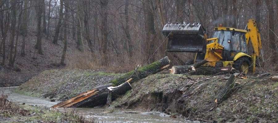 Niedawno zamarznięta, dzisiaj Kumiela wyrywa drzewa z korzeniami [zdjęcia]