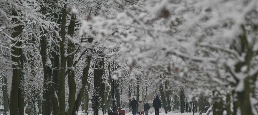 Zima w Elblągu