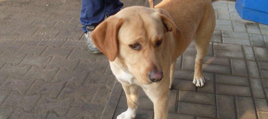 Ten pies błąkał się na ulicy Jagiellońskiej