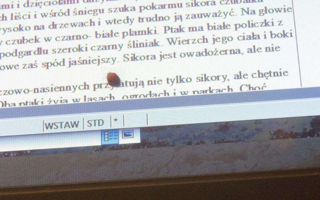 Biedronka uważnie przeczytała mój tekst - full image
