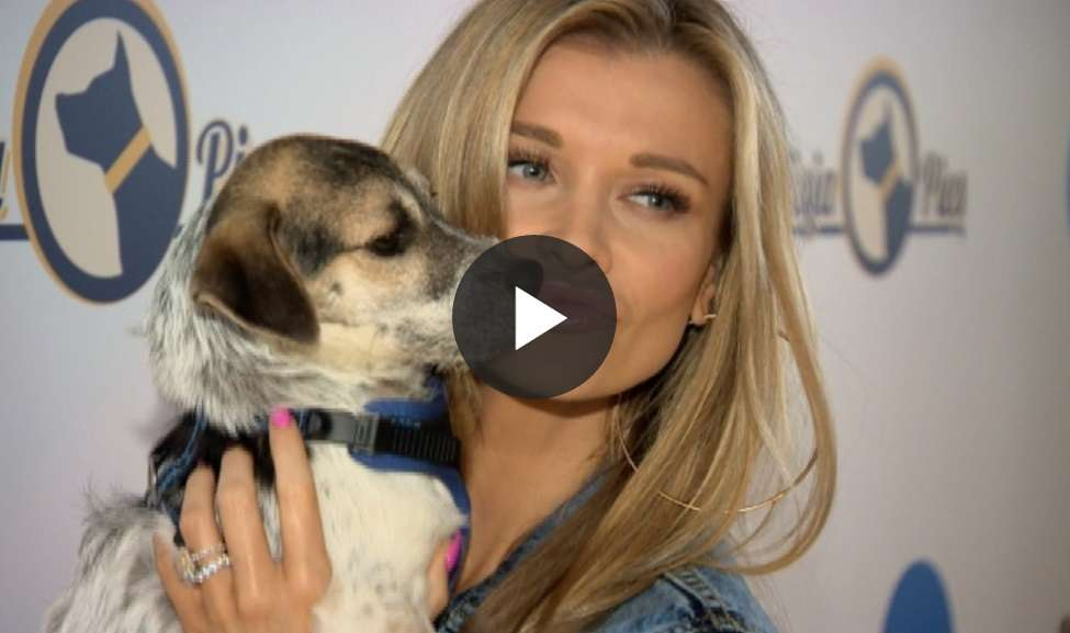 Misja Pies: Joanna Krupa promuje swój projekt - full image