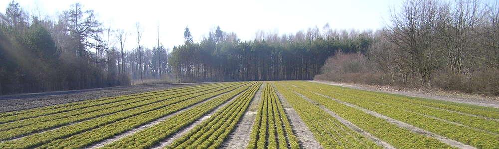 Zaczyna się wielkie sadzenie w lasach. Leśnicy posadzą miliony drzew