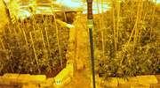 Kolejny cios w narkobiznes. Policjanci zlikwidowali plantację marihuany