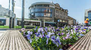 Kwiaty ozdobią centrum Olsztyna