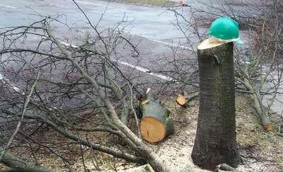 Czytelnicy GO alarmują: W Olsztynie tną drzewa na potęgę! [GALERIA]
