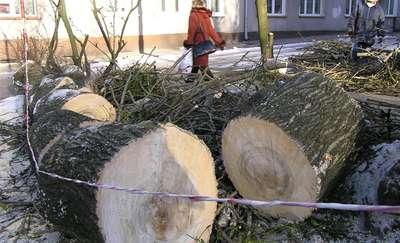 Chciała pomóc mieszkańcom. Dostała 275 tys. zł. kary za ścięte drzewa
