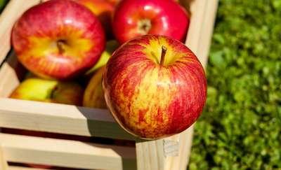 Jedno jabłko dziennie czyni cuda