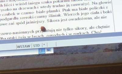 Biedronka na komputerze, czyli wiosna czai się za oknem