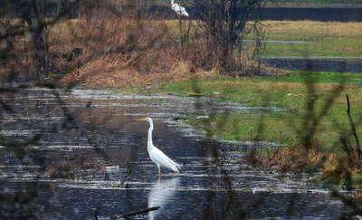 Drwęca zalała łąki w okolicy wsi Pustki