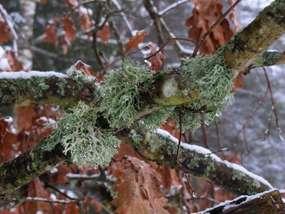 W mrągowskim lesie-w marcu jak w garncu