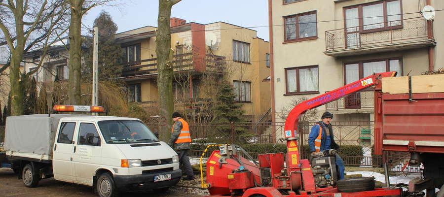 Drzewa zostały wycięte zgodnie z prawem.