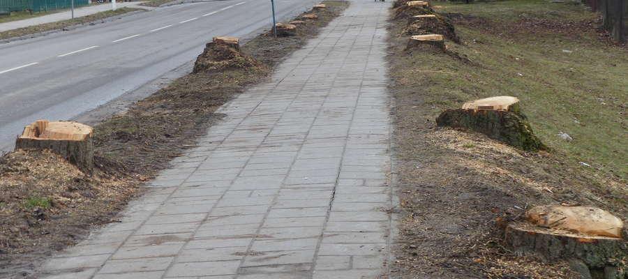 Czy likwidacja drzew przy ul. Armii Krajowej to rzeczywiście skutki zmian w ustawie o wycince drzew?