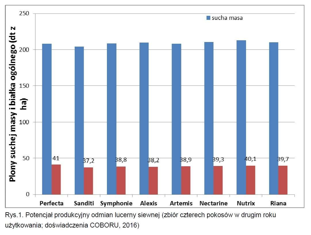 Potencjał produkcyjny odmian lucerny siewnej