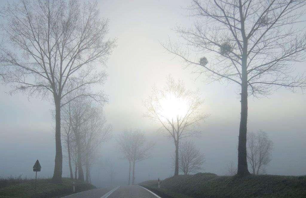 Słońce prześwituje przez mgłę i gałęzie drzew - full image