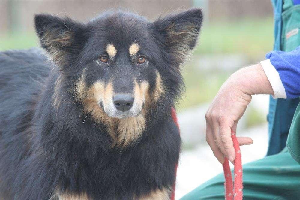 Oddaj niepotrzebne papiery i pomóż bezdomnym zwierzętom! - full image