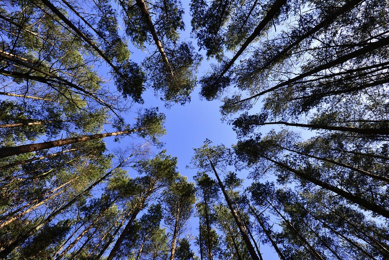 http://m.wm.pl/2017/04/orig/drzewa-warmia-378643.jpg