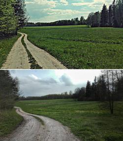 Grudzki las latem (górne zdjęcie) i wiosną.