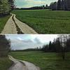 Zdjęcie Tygodnia. Grudzki las latem i wiosną