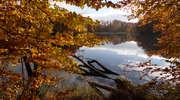 Poznaj tajemnice lasów rakowieckich