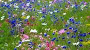 Zasiej kwiatki w Parku Modrzewie
