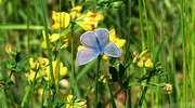 Czy w olsztyńskim centrum rozkwitną łąki?