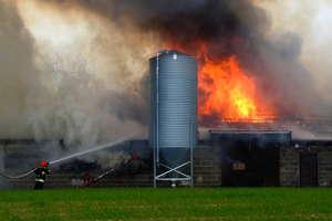 Ogromny pożar kurnika. W środku było kilkadziesiąt tysięcy piskląt!