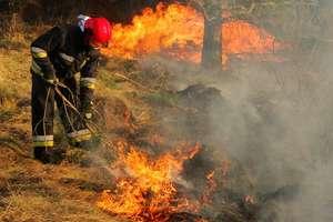 Za wypalanie traw możesz stracić dopłaty