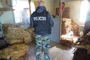 1,5 tony suszu, 700 paczek papierosów bez akcyzy oraz broń z nabojami znaleźli policjanci na posesji w gminie Świętajno