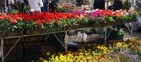Ubiegłoroczna edycja wiosennych targów ogrodniczych przyciągnęła około 150 wystawców i ponad 20000 zwiedzających