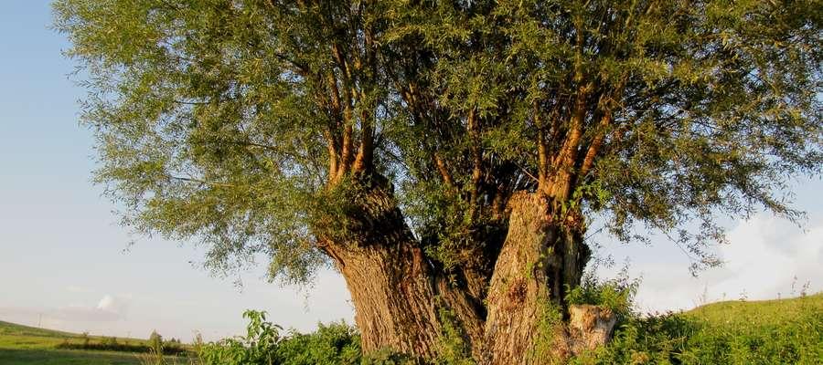 Województwo warmińsko-mazurskie — Mazury Garbate, miejscowość Piaski pod Ełkiem, obszar Natura 2000