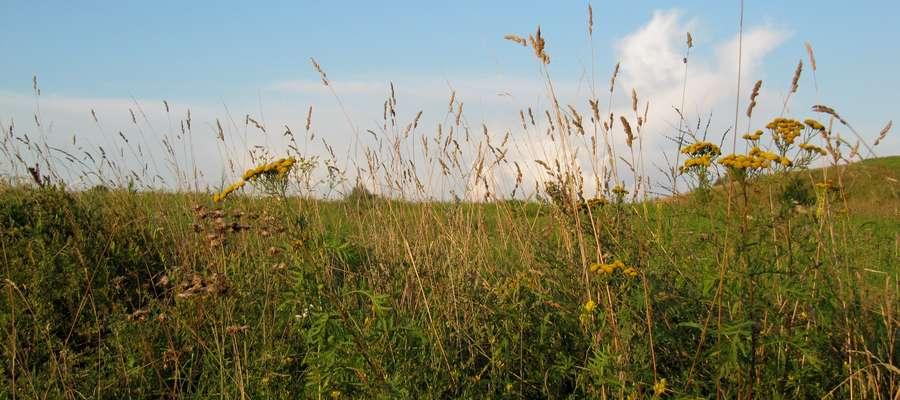W całej Unii Europejskiej podpisano dotychczas ponad 10 mln umów rolnośrodowiskowych
