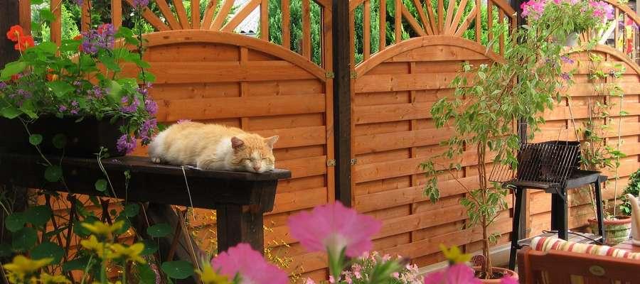 Wyjdź z domu do ogrodu