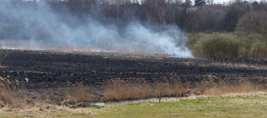 Pożar trzcin nad Drwęcą wiosną 2015 roku