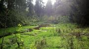 Zdjęcie Tygodnia. Leśny strumień, dopływ Łyny