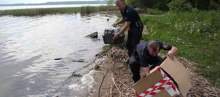 Strażnicy miejscy uratowali rodzinę gągołów